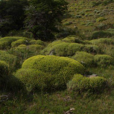 Landschap - mos